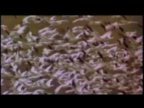 a Rudolf Steiner con affetto