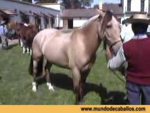 Criollos Argentinos Horses Video