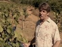 Winemaker Video Blog #3- Testing Grape Ripeness