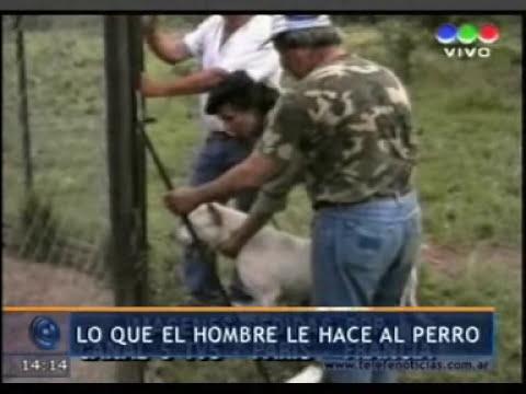 DR. ROMERO EN TELEFÉ NOTICIAS -- Cuidado con el perro. Accidentes con animales