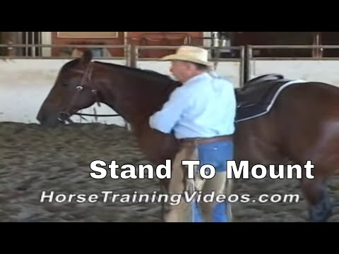Horse Training - Stand Still to Mount