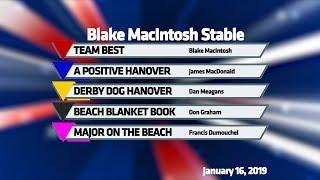 TEAM BEST, A POSITIVE HANOVER, DERBY DOG HANOVER, BEACH BLANKET BOOK, MAJOR ON THE BEACH, 1-16-19