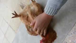 Посмотрите, что произошло с курицей, когда упомянули имя Всевышнего!!