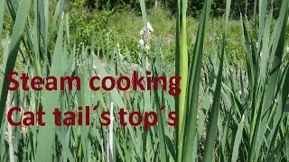 Steam cooking Cattail´s top´s