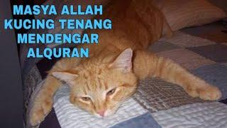 Download Lagu MASYA ALLAH..!! Kucing Khusuk Mendengarkan Lantunan Ayat Suci Al Quran Gratis STAFABAND
