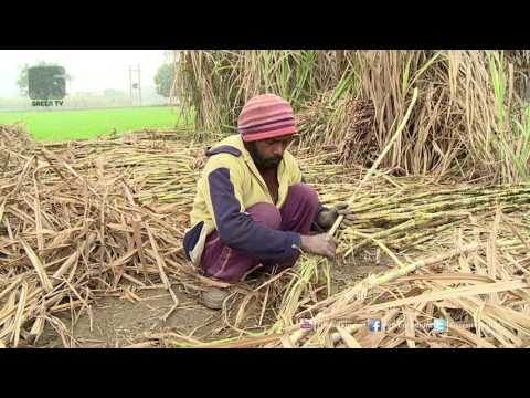 Des Diary: 17th June 2017 - Full Episode Green TV