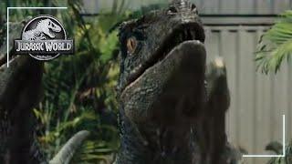 Making Raptor Sounds