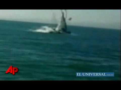 Difunden video del ataque de ballena sobre yate