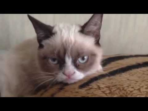 Do not disturb Grumpy Cat!