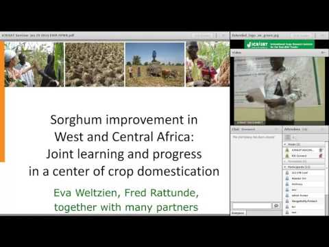 Sorghum Improvement in West and Central Africa: Joint learning in...