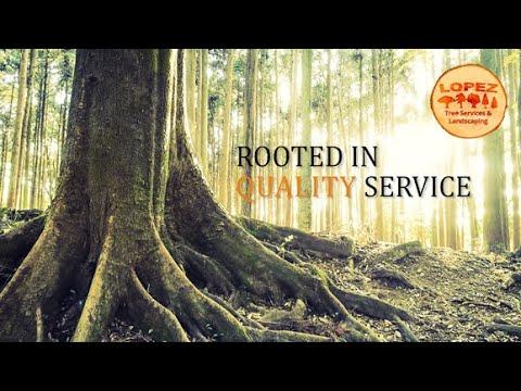 Lopez Tree Service