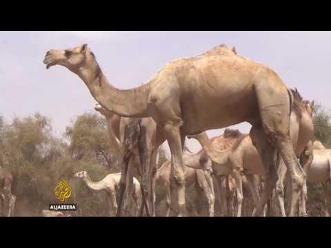 Mali's Tuareg fear famine