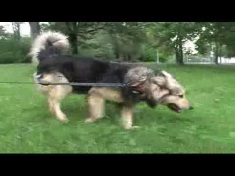 PLATON szuka domu Karol Strasburger poleca do adopcji psa z Palucha