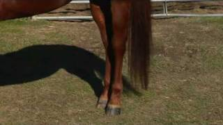 What Types of Breeds Are Used for Barrel Racing?