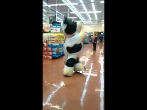 The supermarket cow dance