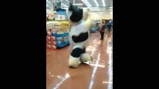 Furor por la vaca que baila Nene Malo...¡en México!