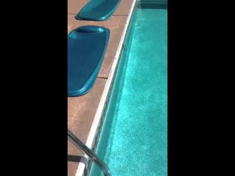 Uninvited pool guest