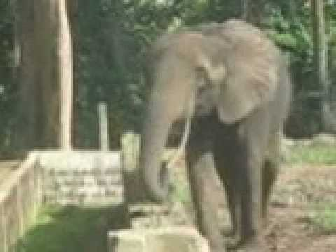 12 11 21 Abidjan Zoo Start of Training CAN 1