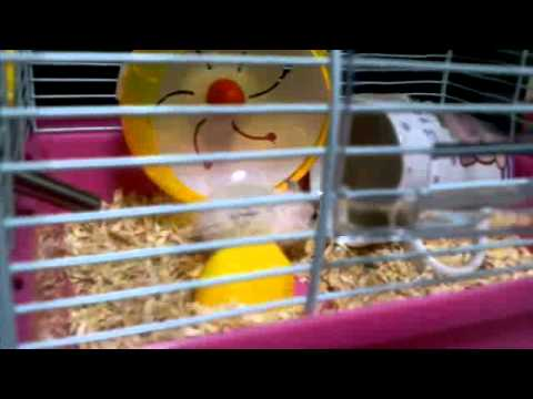 Crazy Hamsters Wheel Download Crazy Hamster Playing