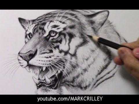 Drawing Time Lapse: Tiger