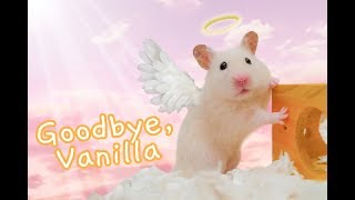 Goodbye, Vanilla 💔