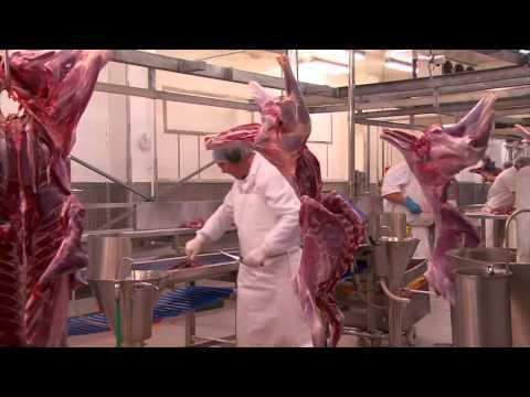 Kangaroo meat halal