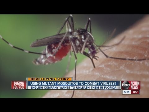 Genetically-modified mosquitoes have skeptics
