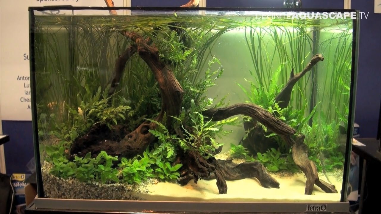 Aquascaping - Aquarium Ideas from Aquatics Live 2012, part ...