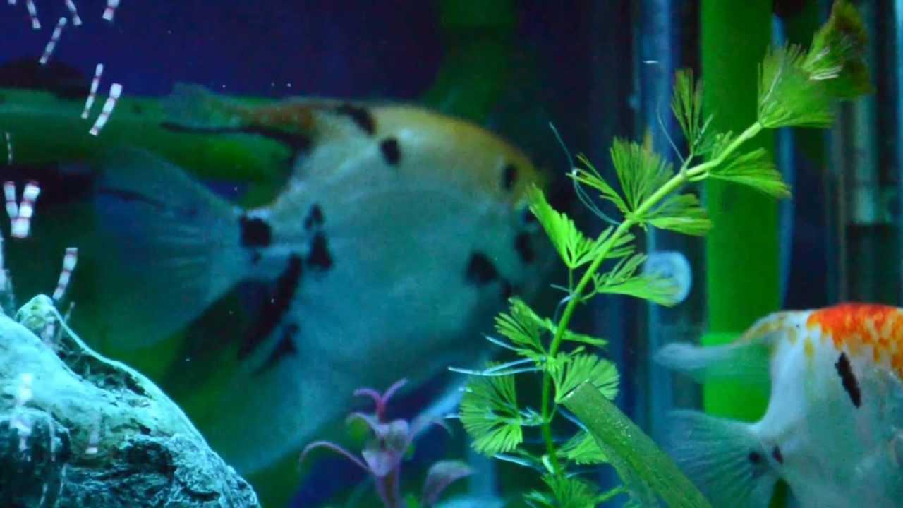 Mi acuario peces de aguas tropicales 150 litros hd vi for Peces tropicales acuario