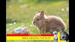 Darf man Ostern noch feiern? |Osterspecial |Satire