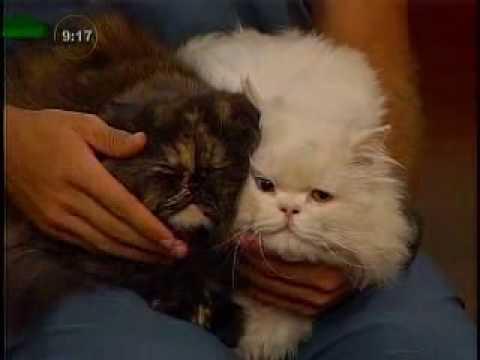 Errores en la crianza de un gato