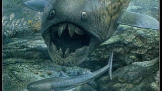 The Evolution of Fish