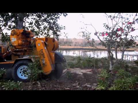 Taylor Tree Co. stump grinding services, Kiln MS