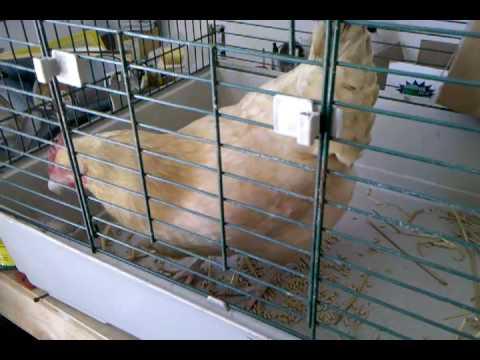 J forex 3 ducks