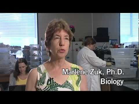 UCR Prof. Marlene Zuk on Her Book and Sex in the Insect World