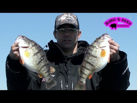 Lake Michigan JUMBO Perch Fishing ONLY on HawgNSonsTV!