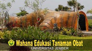 Download Lagu Wahana Edukasi Tanaman Obat (Herbal Medicine) Universitas jember Gratis STAFABAND