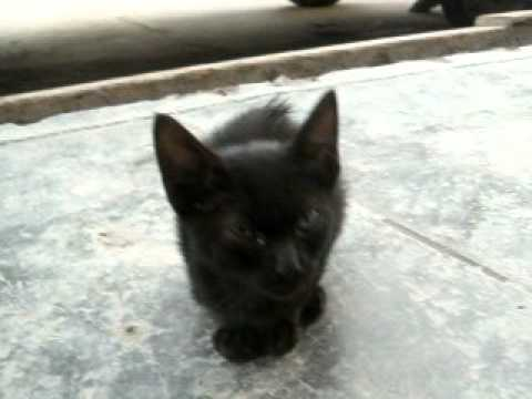 bebé negro