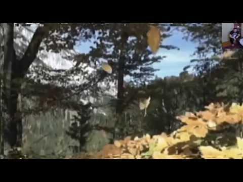 Лагерные песни - Дым кольцами