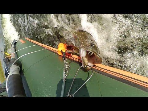 ловля щуки на поливах
