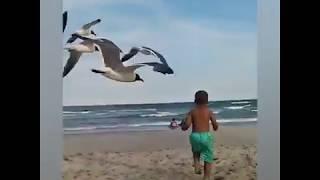 Funny video ever comedy tadaka baby funny  crazy birds  #comedy #funnyvideo #animal #fun