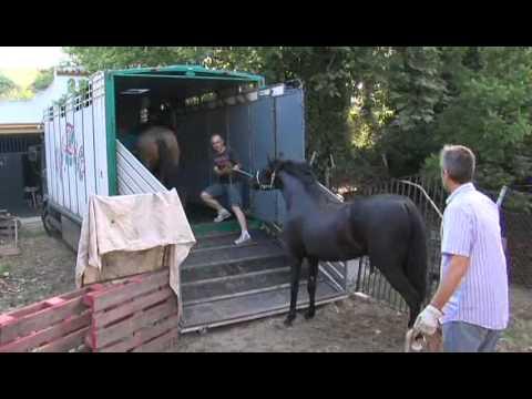 Yeguada Caballero Perea - Traslado de caballos