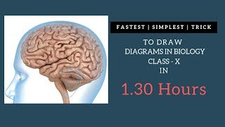 Draw Biology diagrams in easy steps : Class 10th NCERT X Science