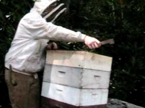 Brett Butler Certified Beekeeper Extraordinaire