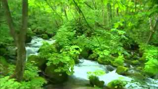 A Most Beautiful RELAXATION music with nature sounds of flowing river water down the streams !
