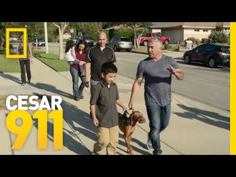 Dog Training: How to Get the Whole Family Involved | Cesar 911