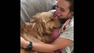 Dogs 🐕 funny videos