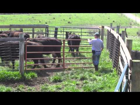 Spring Cattle Move 2013