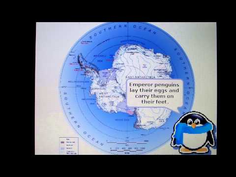 UCLA ESS 15 ocean/climate science communication project Penguins and Climate Change