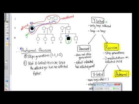 Pedigree Analysis Examples